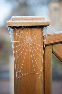 Web tailored to fence post