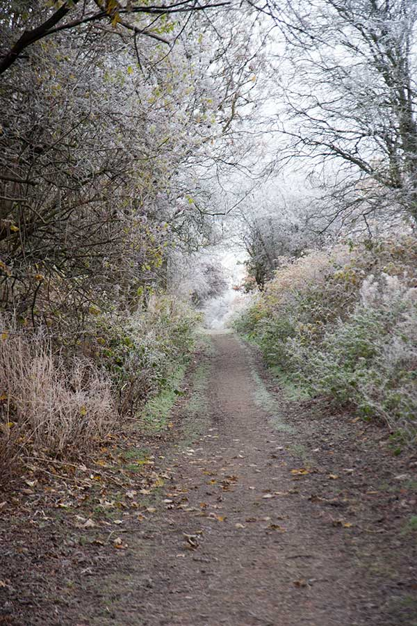 Path to Straiton Pond